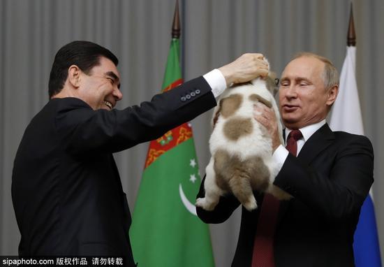 土总统赠普京萌犬 作普京65岁生日礼物