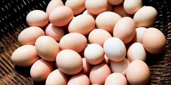 鸡蛋价格一个月内下降23.43% 预计短期蛋价将继续回落