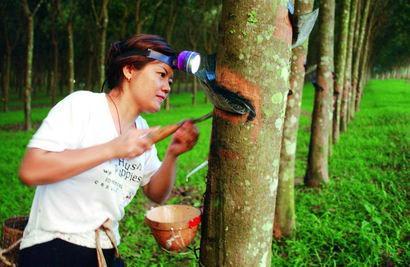马来西亚8月橡胶产量为61252吨 环比月增11.1%