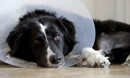 女子陪病狗被扣工资 法院判公司补发工资