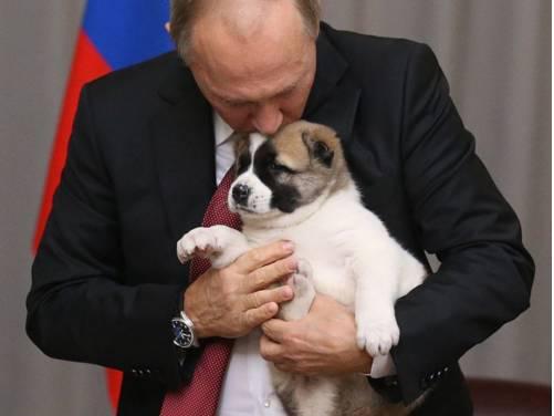 普京又获一只萌犬 又亲又抱还露出宠溺的表情