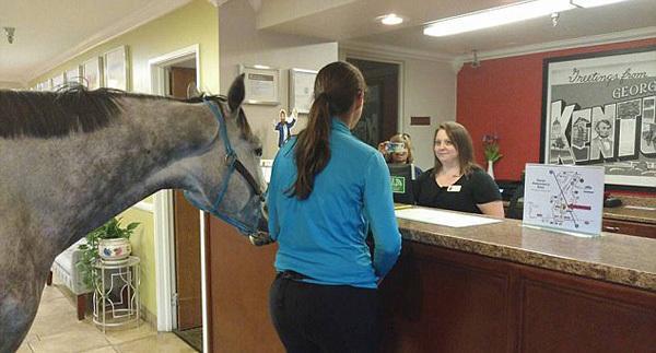 带爱马入住酒店 为测验酒店的宠物友好政策