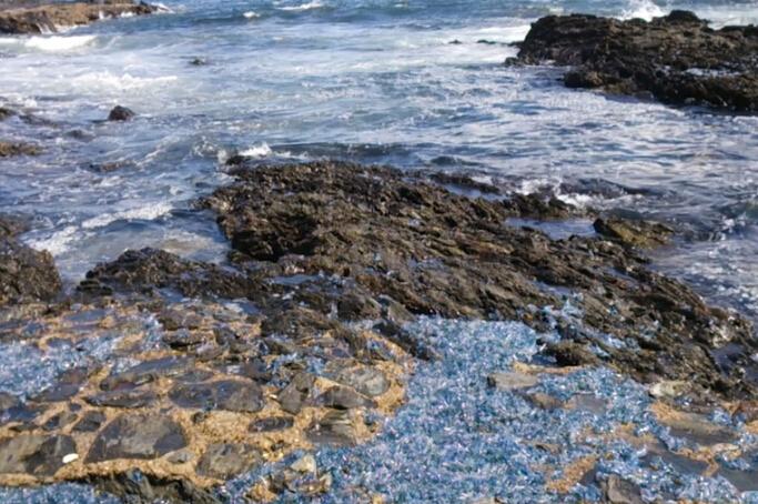 成千上万蓝瓶水母被冲上澳洲海滩 睁亮双眼不是饮料瓶