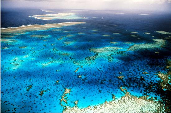 珊瑚陷入白化困境大堡礁危在旦夕 再不行动将永久失去它们
