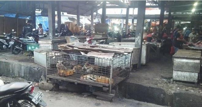 印尼每年吃掉100万只狗 大量狗狗残忍地被杀害