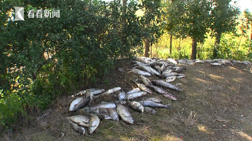 鱼塘13000斤鱼离奇死亡 到底是谁投入了剧毒的农药?