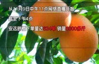 深山里长出黄金果 直播5小时6000斤脐橙被抢购一空!