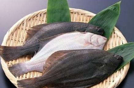 鱼身哪个部位营养最高