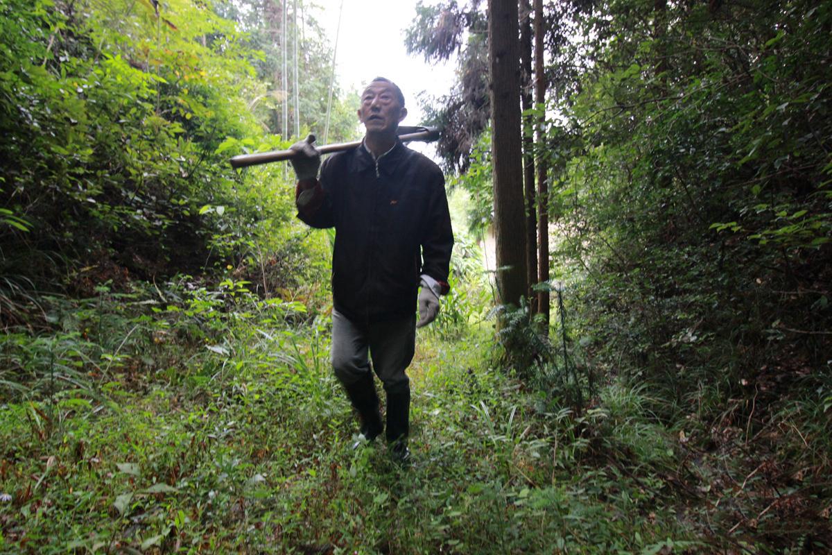 他用28载守护山林 满山树木葱茏成了不少野生动物栖息之地