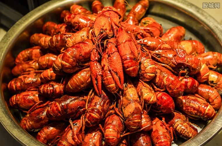 400斤龙虾走红毯 红毯上密密麻麻遍布了龙虾的身影