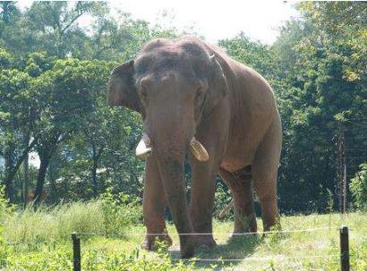 游客拍大象被踩死 全身有多处伤势