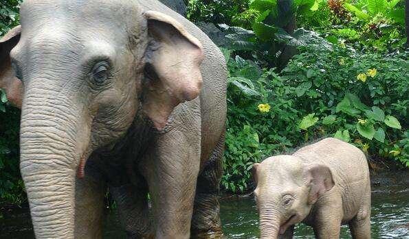 两名游客近距拍大象被踩死 全身多处受伤当场死亡