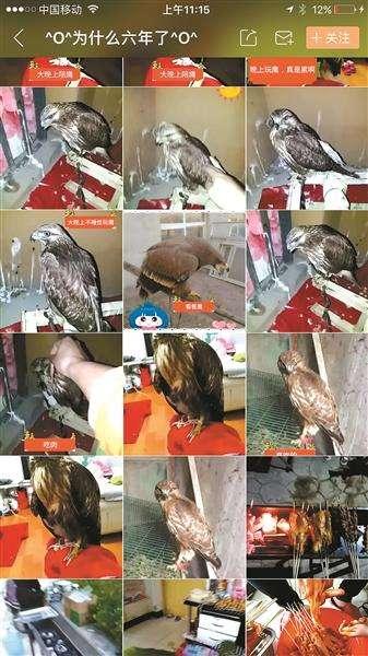 直播平台贩卖猛禽被刑拘 网友称简直就是作死