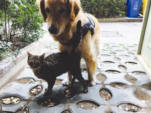 狗狗瞒着主人收养流浪猫 把狗粮让给猫吃自己饿得瘦巴巴的