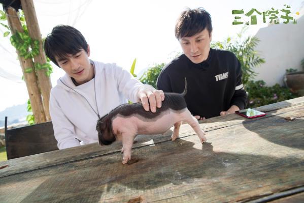 林更新朱桢搭火养猪 这到底是什么魔性的画风?