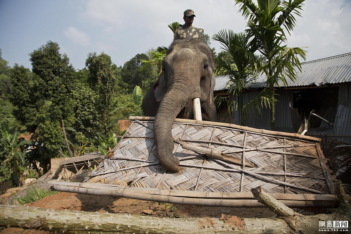 印度为清理非法住户 出动大象