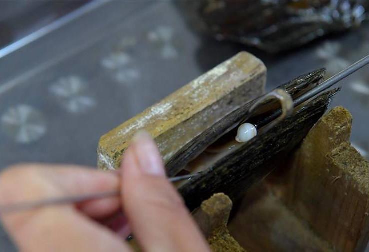 江西万年县淡水珍珠产业茁壮发展 年产值突破12亿元