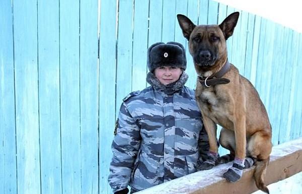 犬看守最危险监狱 系韩国首尔动物克隆中心科研人员克隆