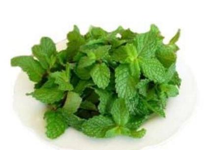 薄荷叶泡茶的功效 有健胃祛风的作用