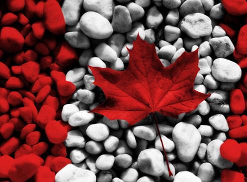 """加拿大央行一出手 押注""""鹰派""""满盘皆输?"""
