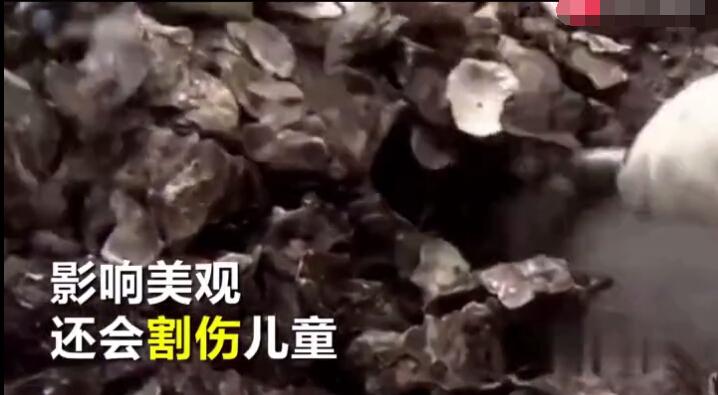 报道说,就在当地人收集废弃耗壳的时候,又发现了前来挖掘生蚝的两名中国人。
