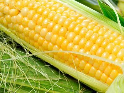 玉米期澳门正规博彩十大网站价格在东北玉米价格领涨下一路上扬