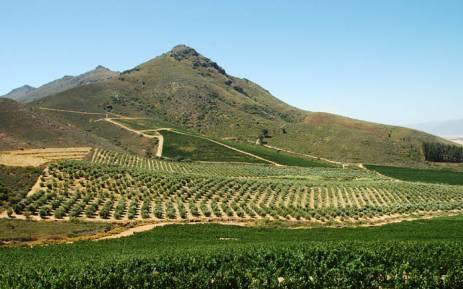 南非的西开普省经历干旱灾害 2018年葡萄酒产量将降低