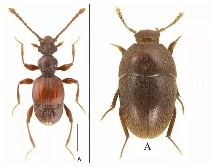 上海现昆虫新物种 正发起为其命名活动