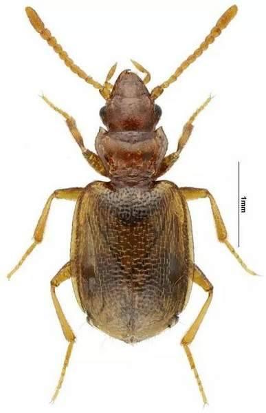 上海现昆虫新物种:现在就差名字了 请你来取名