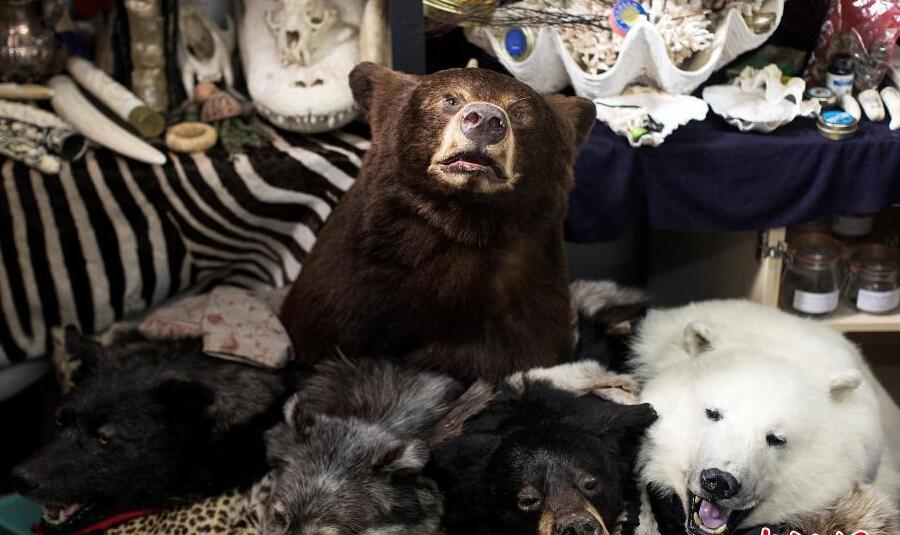 熊头,狼皮以及整张虎皮铺满地。
