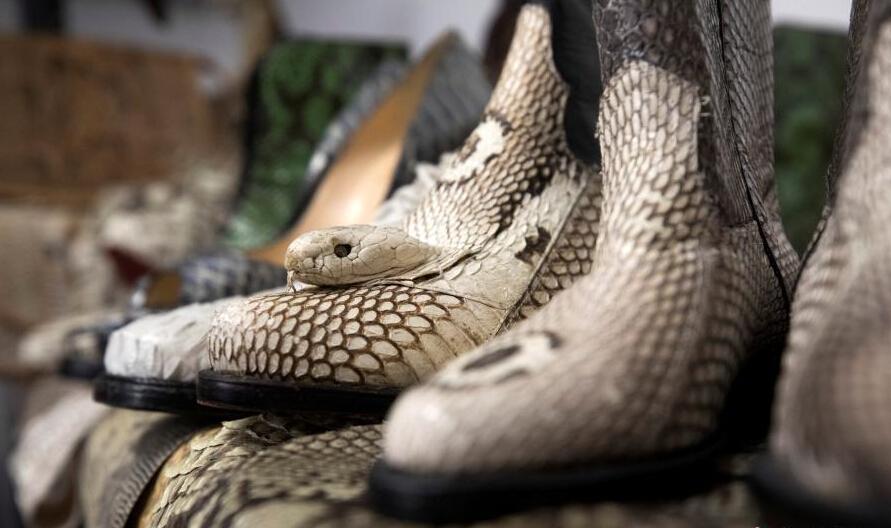 用蛇皮制成的鞋,鞋面上还保存着蛇头。