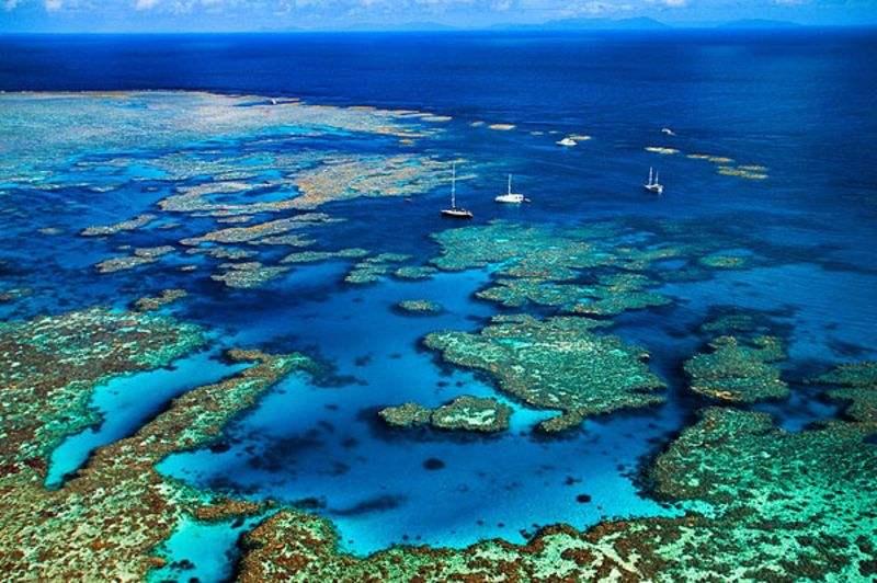 """珊瑚也能""""试管婴儿""""?大堡礁启动全球最大规模人工播种项目"""