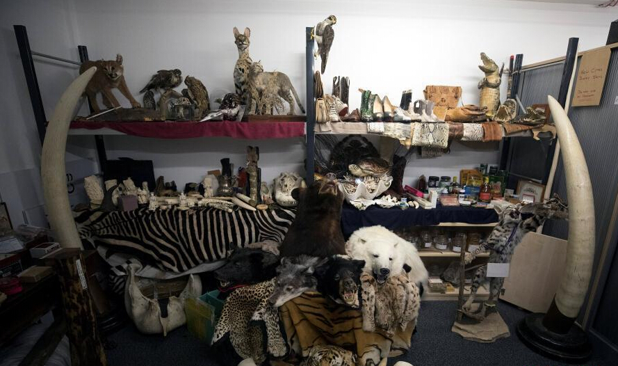 英国查扣一批濒危物种标本