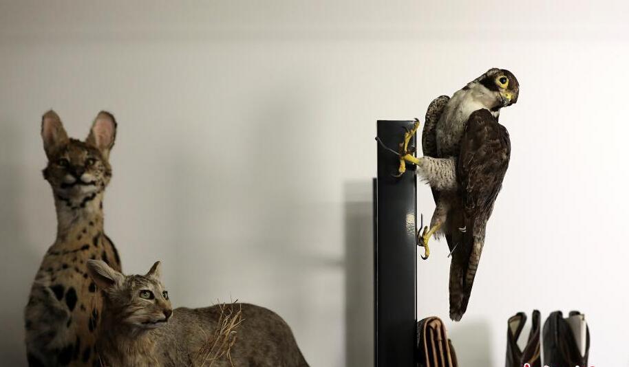 图为制作成型的动物标本。