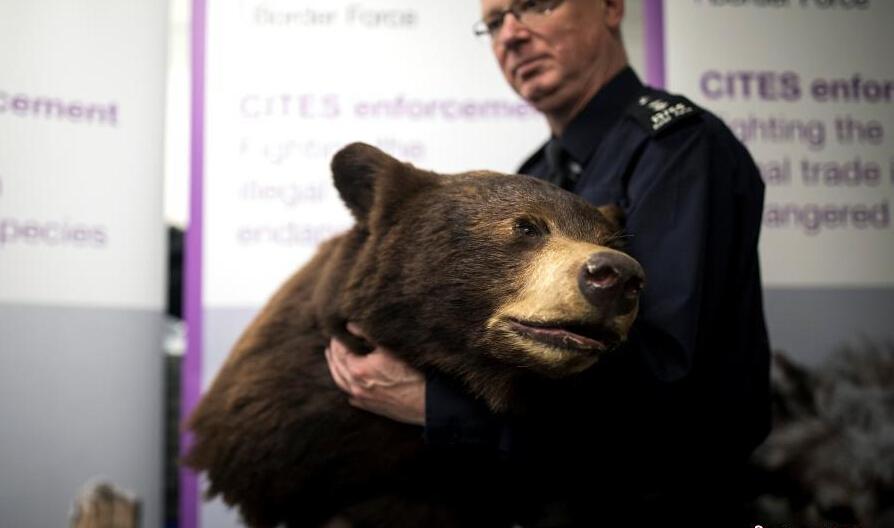 希斯罗机场海关警察展示查扣的动物标本。