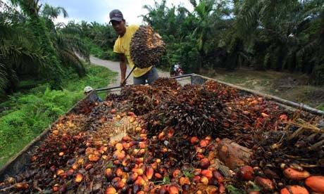 需求疲弱 棕榈油期货连续下挫