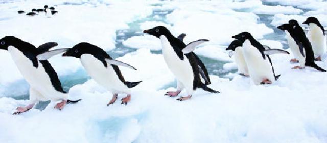 中国科学家发现东南极最古老的企鹅聚居地