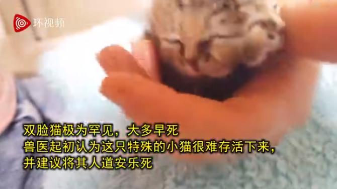 南非诞生双脸小猫 大多出生后几个小时便会夭折