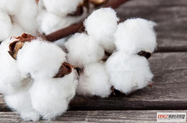 今日(12月27日)最新棉花价格行情走势