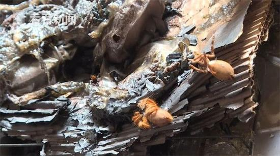 电热毯烧死宠物 400多只蜘蛛都被烧死或者被熏死