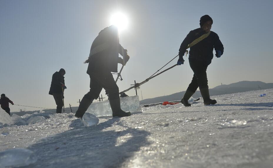 采冰人日采冰90吨