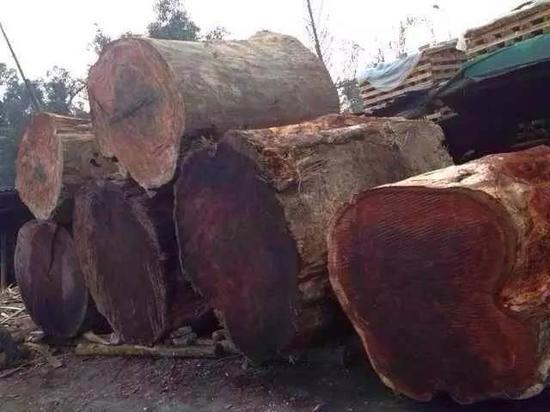 缅甸花梨木物美价廉 成红木家具最普遍使用的材质