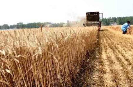 欧盟委员会周二调降本年度小麦及玉米预估