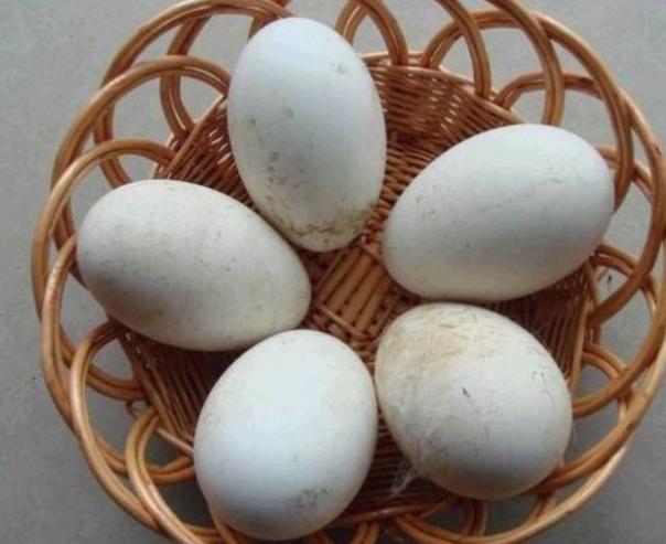 鹅蛋有什么功效?含丰富的维生素和矿物质