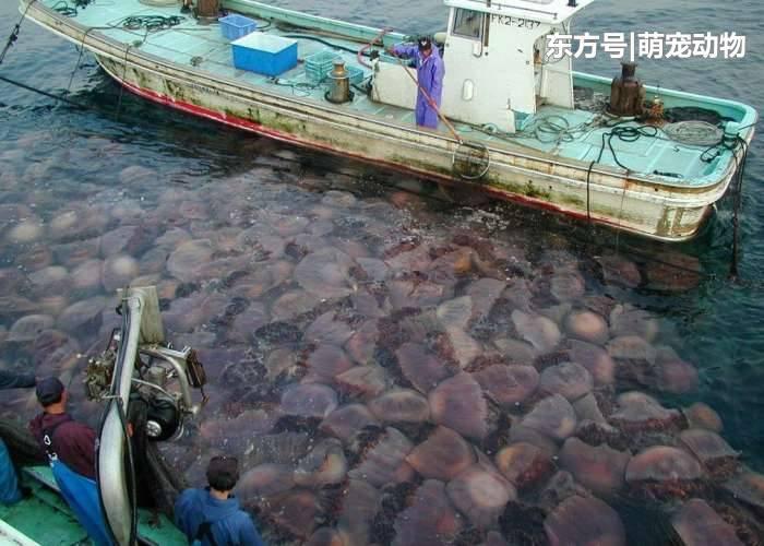 日本海域现大批尸体 或受之前核泄漏影响所致