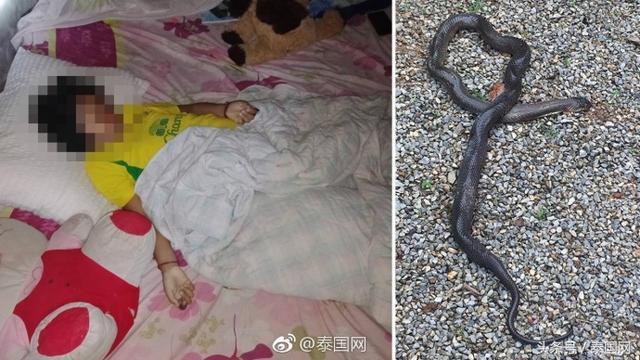 泰国9岁女童睡梦中被蛇咬死 已无生命迹象