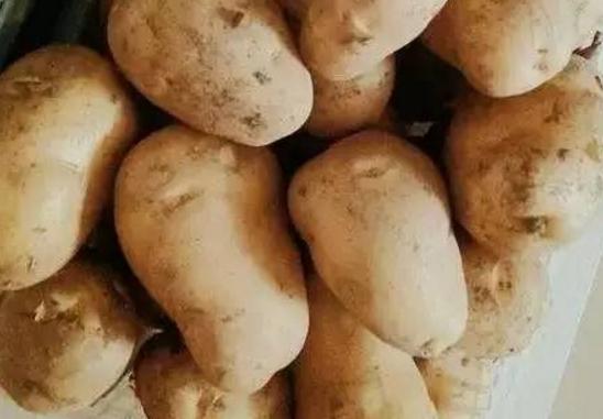 土豆的营养价值 怎么吃才最好?