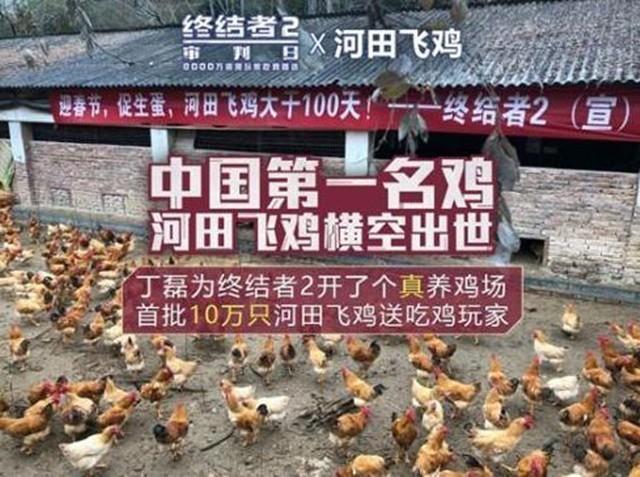 网易出面否认养鸡传闻:目前仍以养猪为主