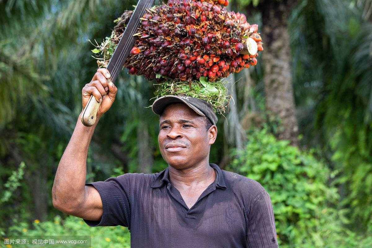 周三亚洲棕榈油现货市场价格稳中有降
