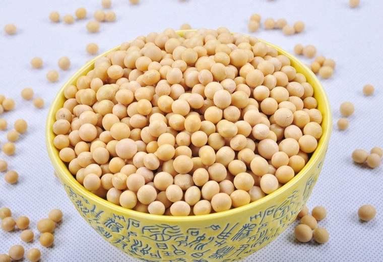 大豆和黄豆的区别有哪些
